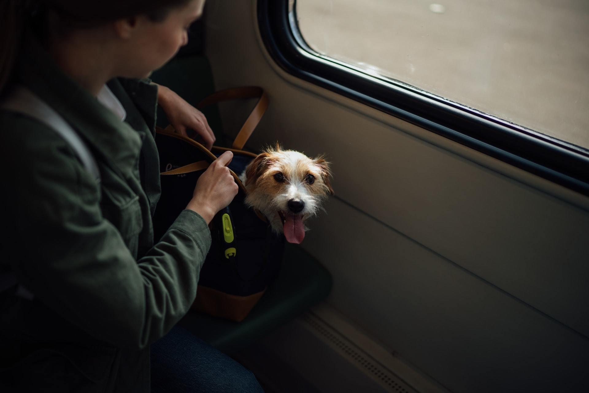 international dog travel