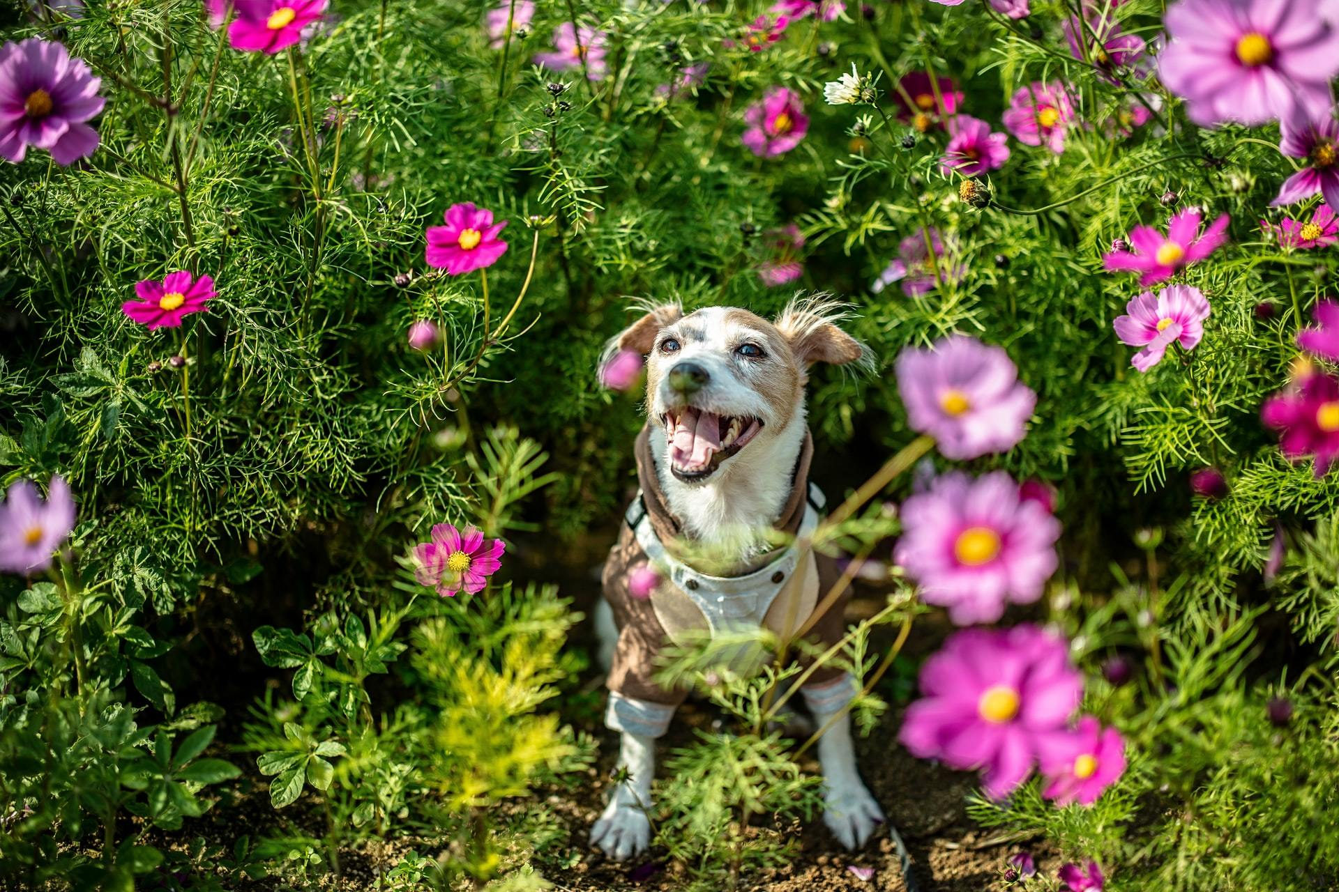 is claritin safe for pets