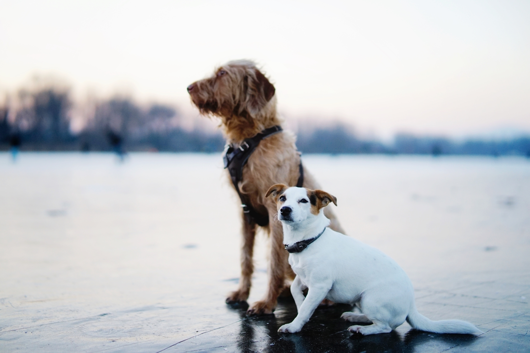 Is diet important for my dogs health
