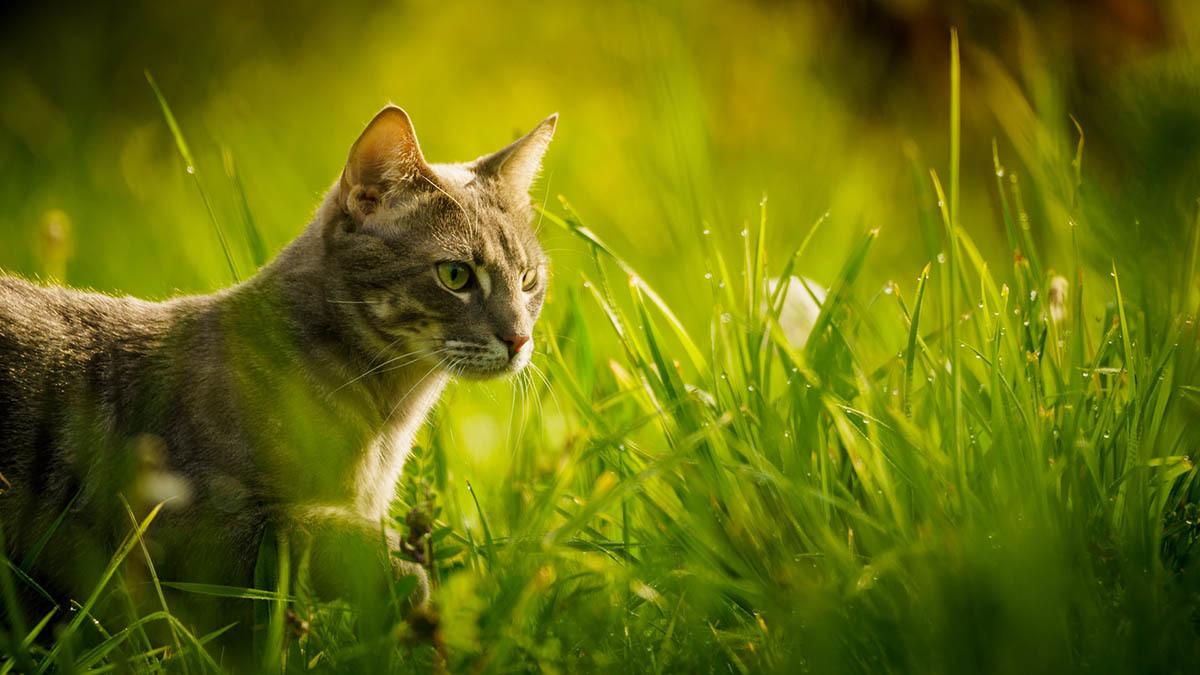 Så skyddar du katten bäst mot fästingar