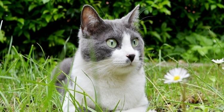 Katt i gras