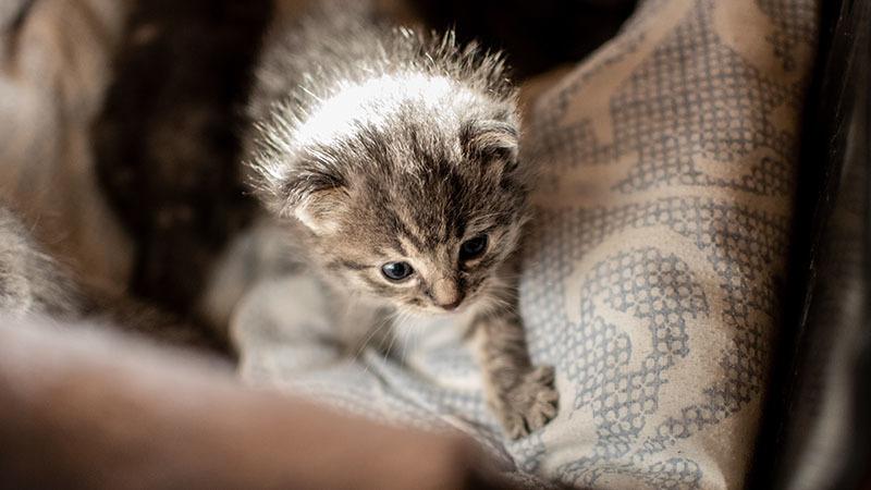 Kitten on furniture