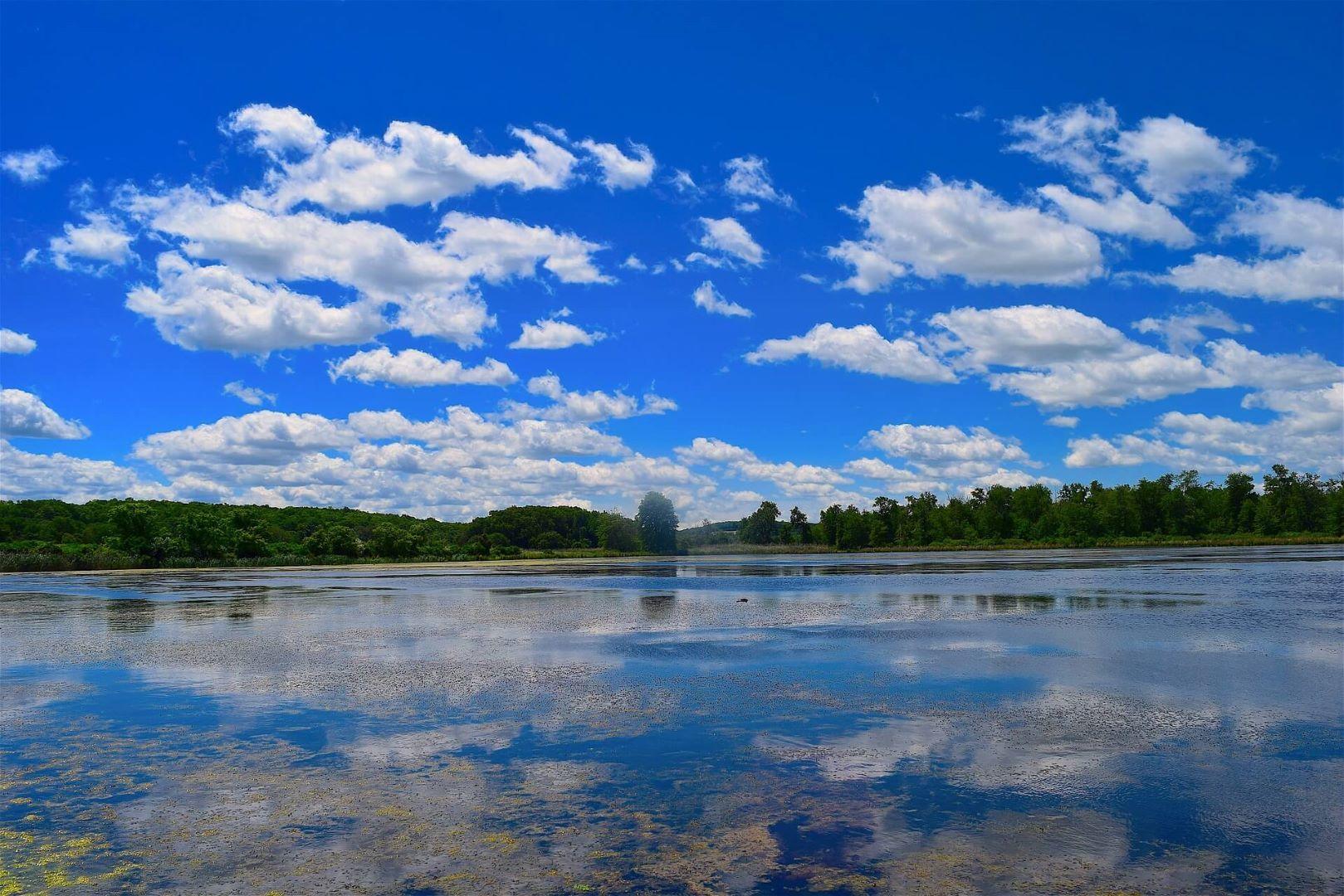 Lake blue algae