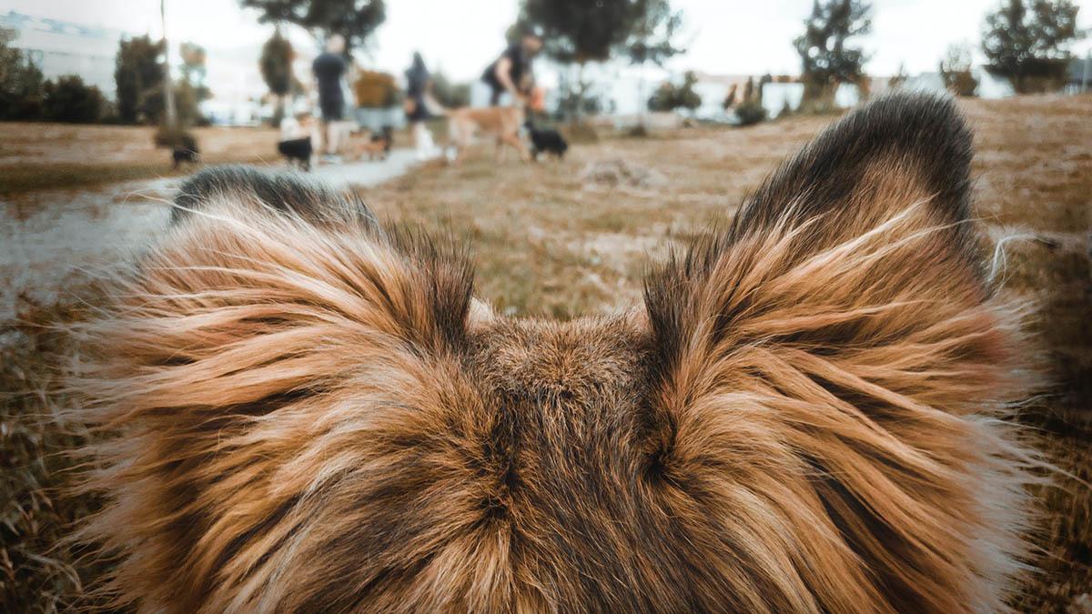 Nasselutslag hund