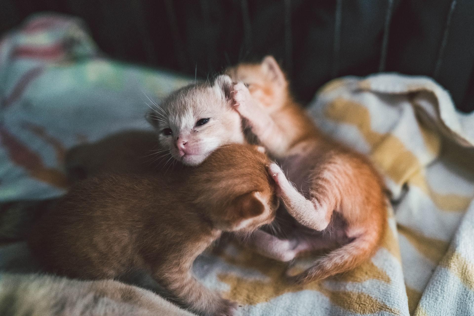 newborn kitten care