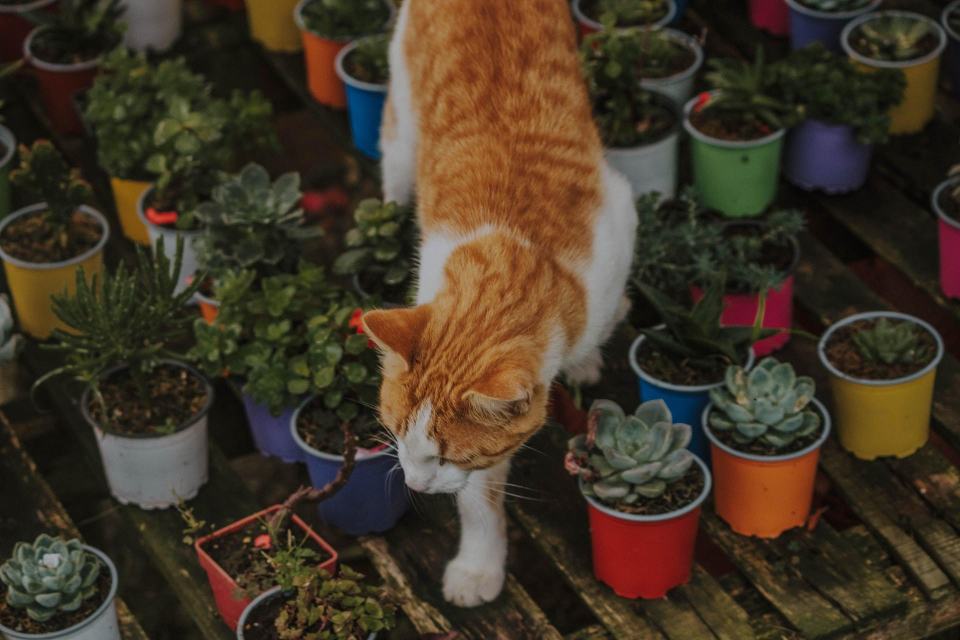 non toxic plants cat