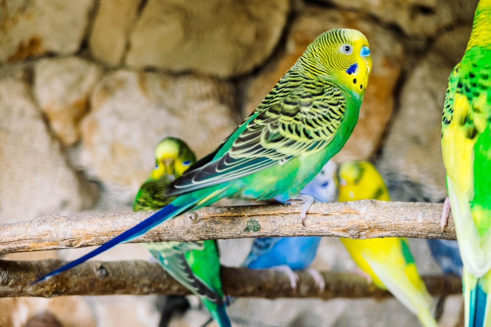 pet bird entertainment