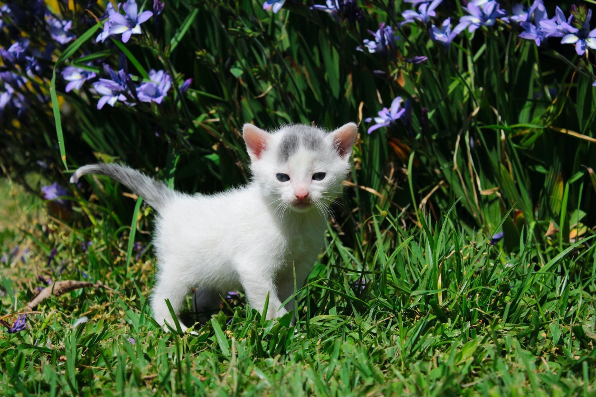 poisonous plants cat