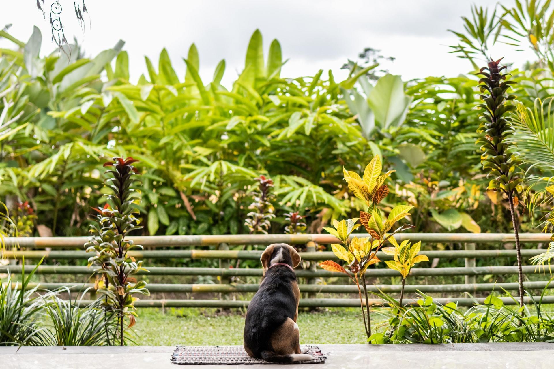 poisonous plants dog sago palm