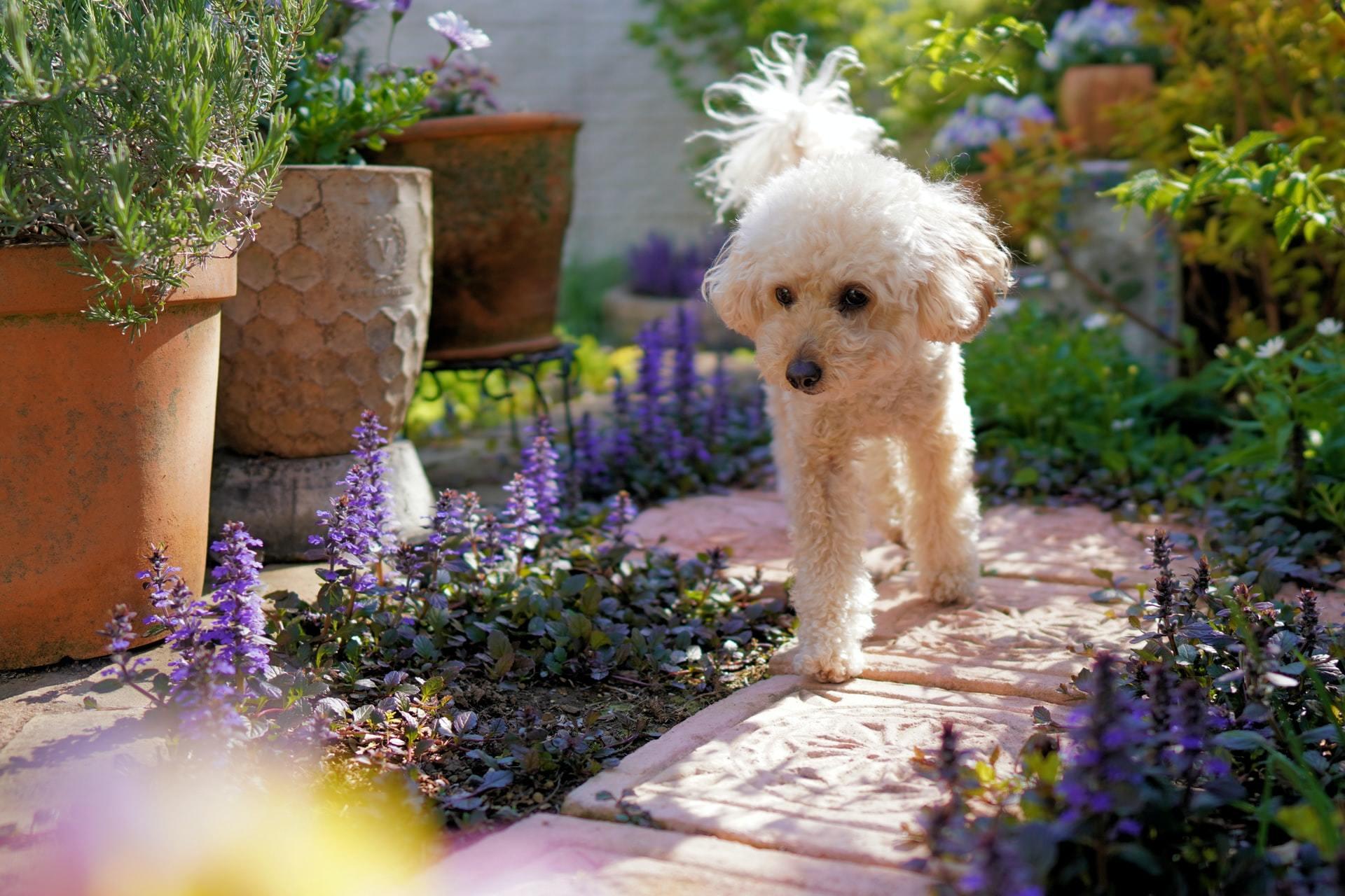 poisonous plants dog