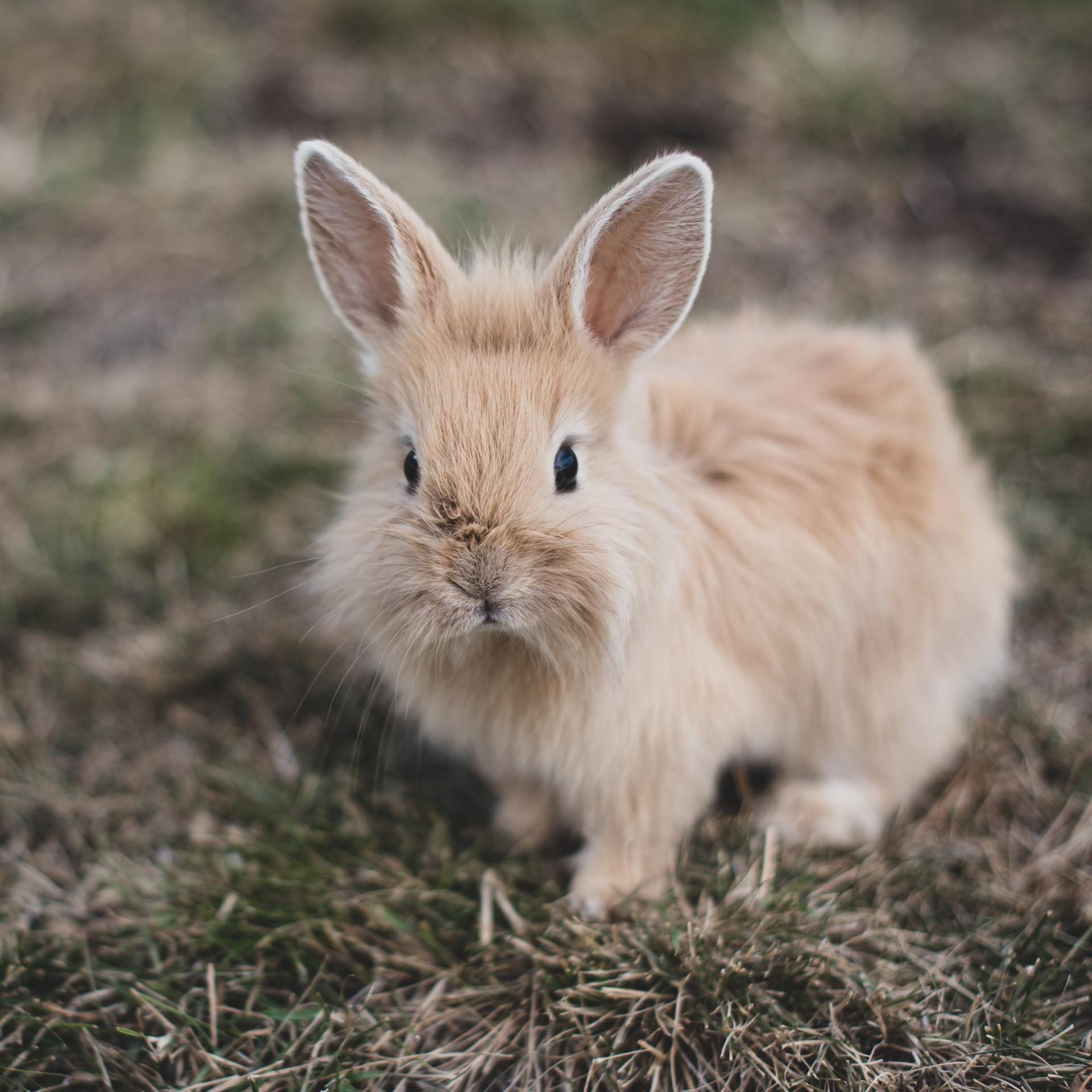 rabbit facts