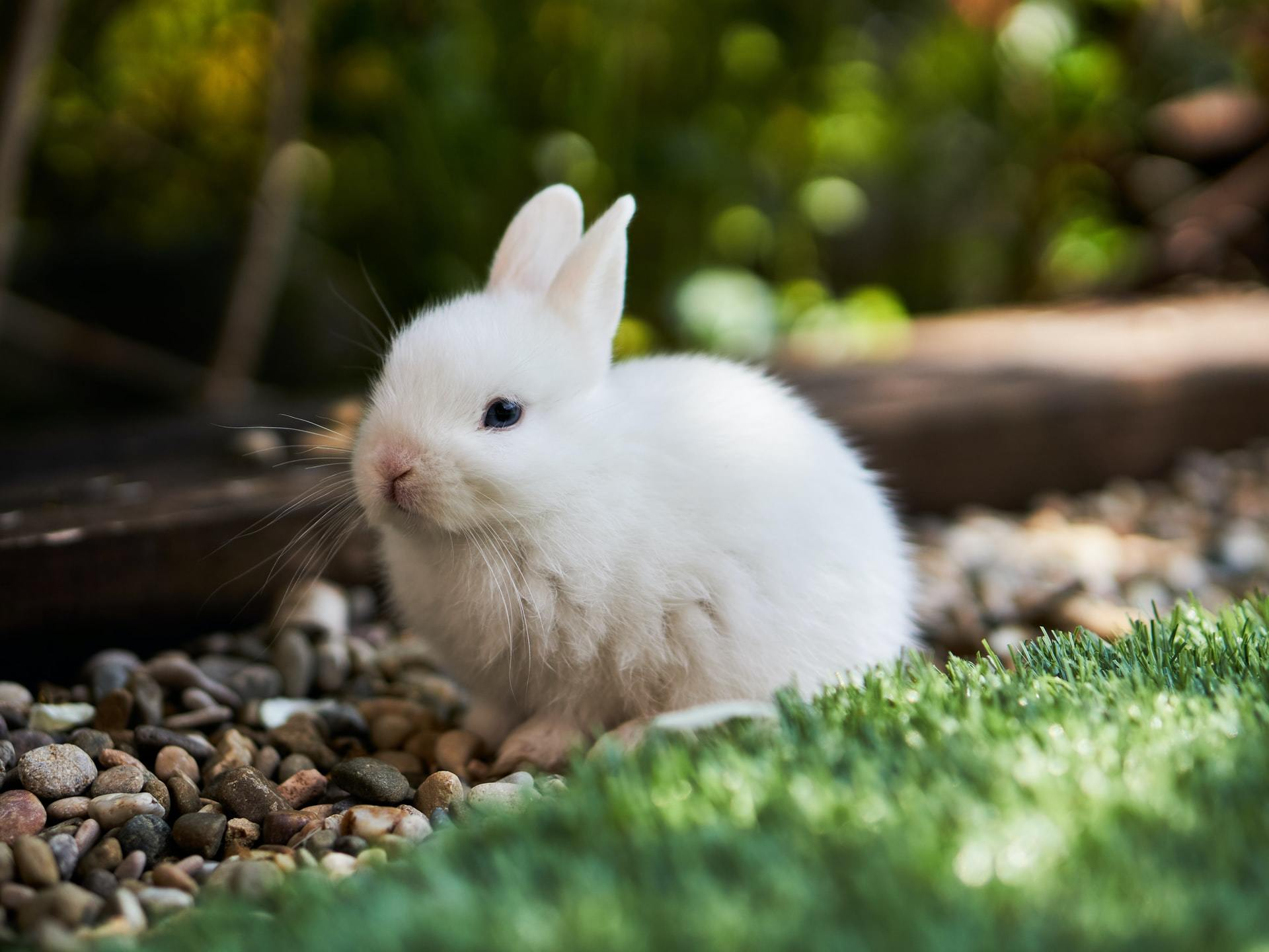 rabbit hemorrhagic disease
