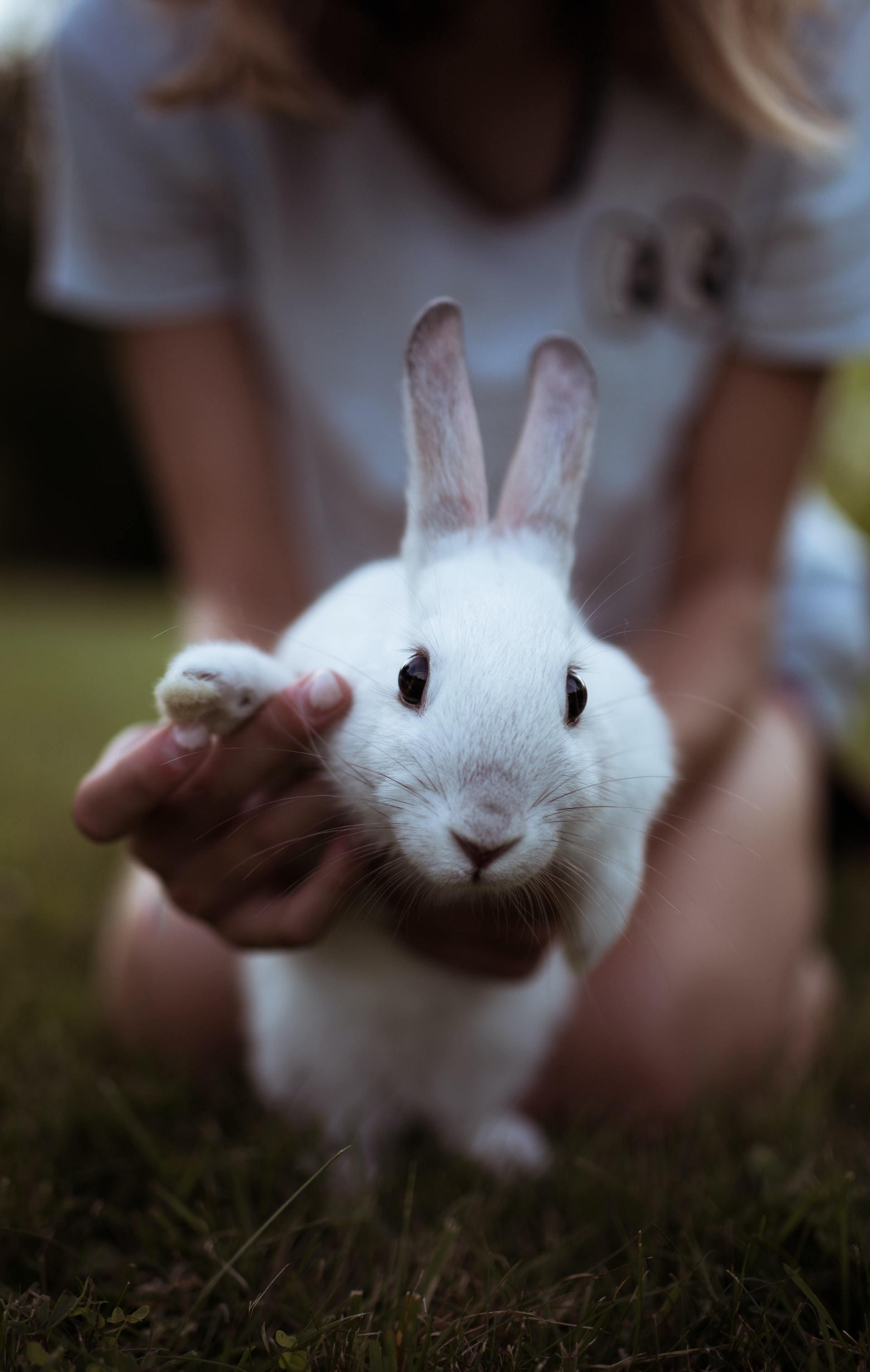 rabbit nail trims