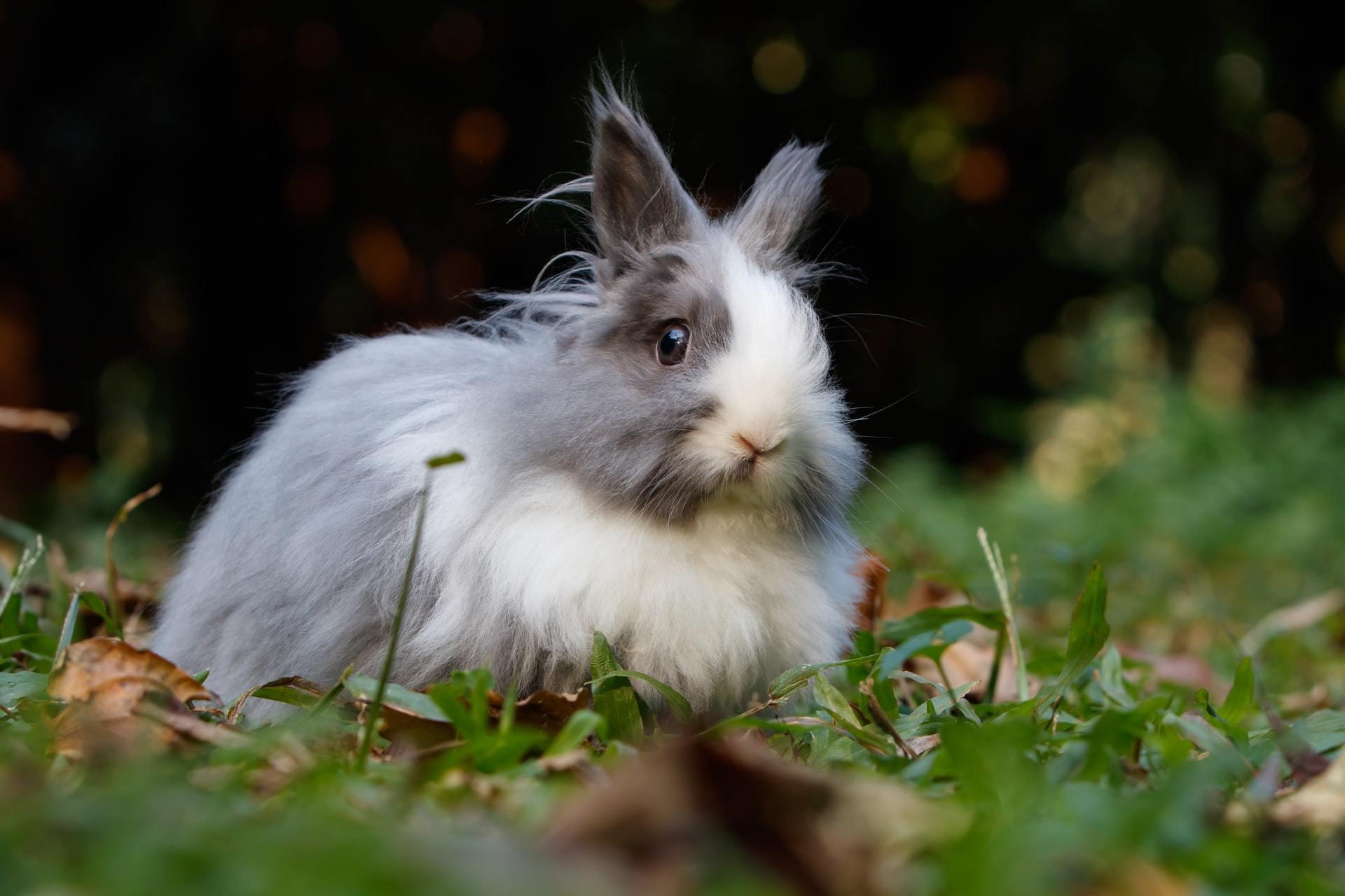 rabbit pet health