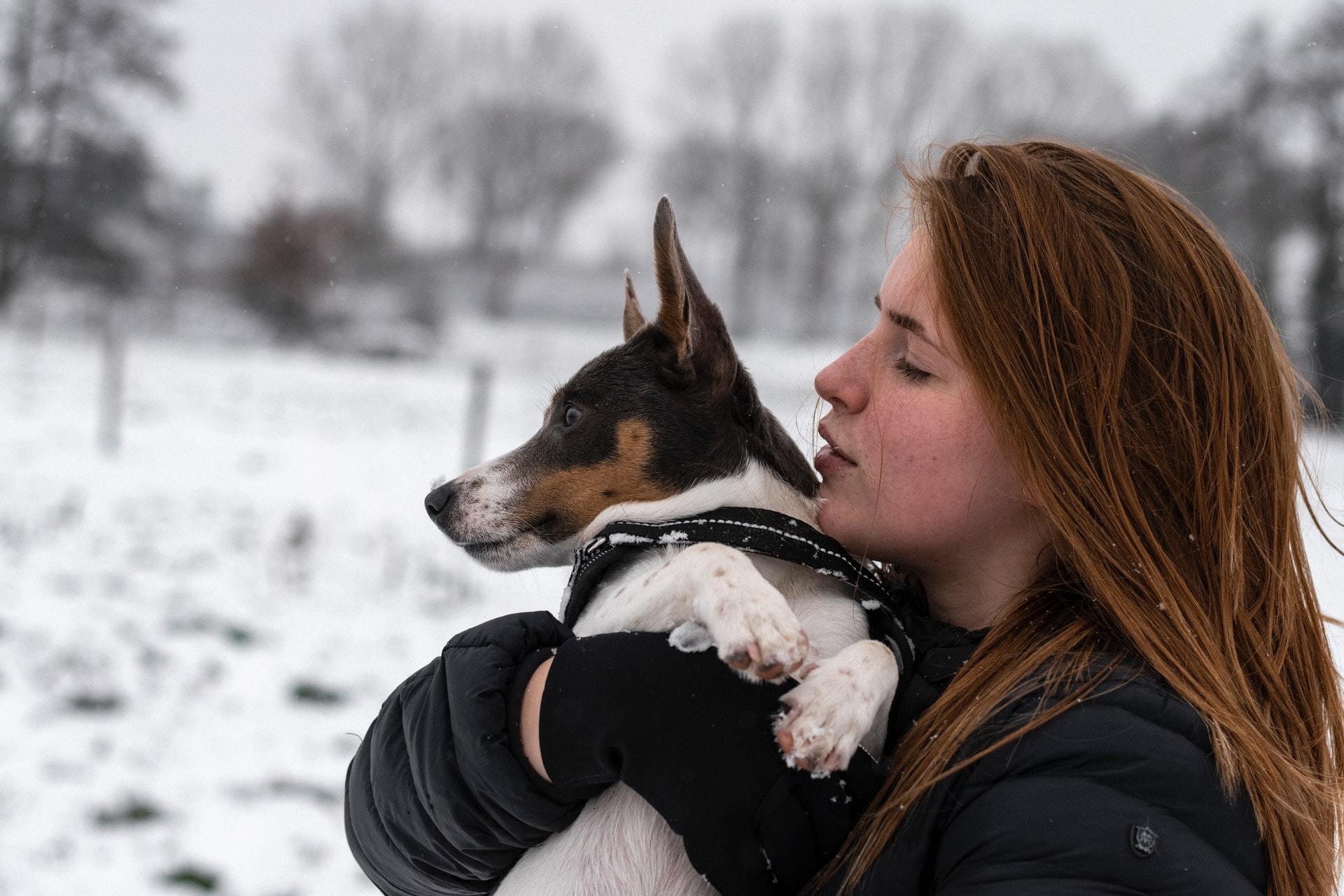 dog wound treatment