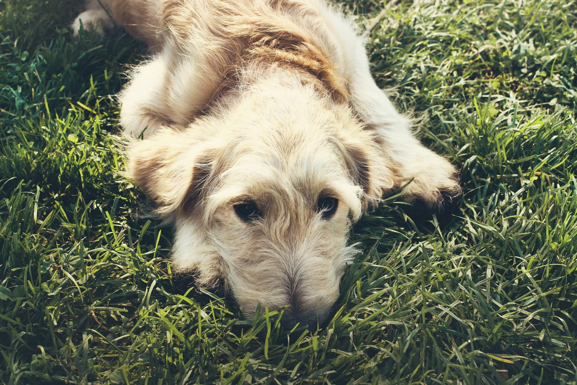 rodent poisoning in pets