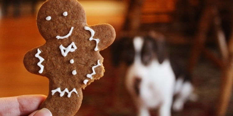 A dog in the background starting at a gingerbread man with a missing leg in the foreground