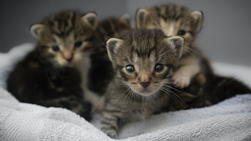 Small cute kittens
