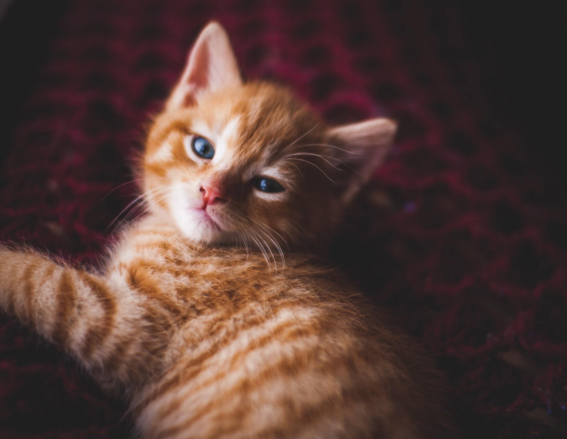 sneezing kitten