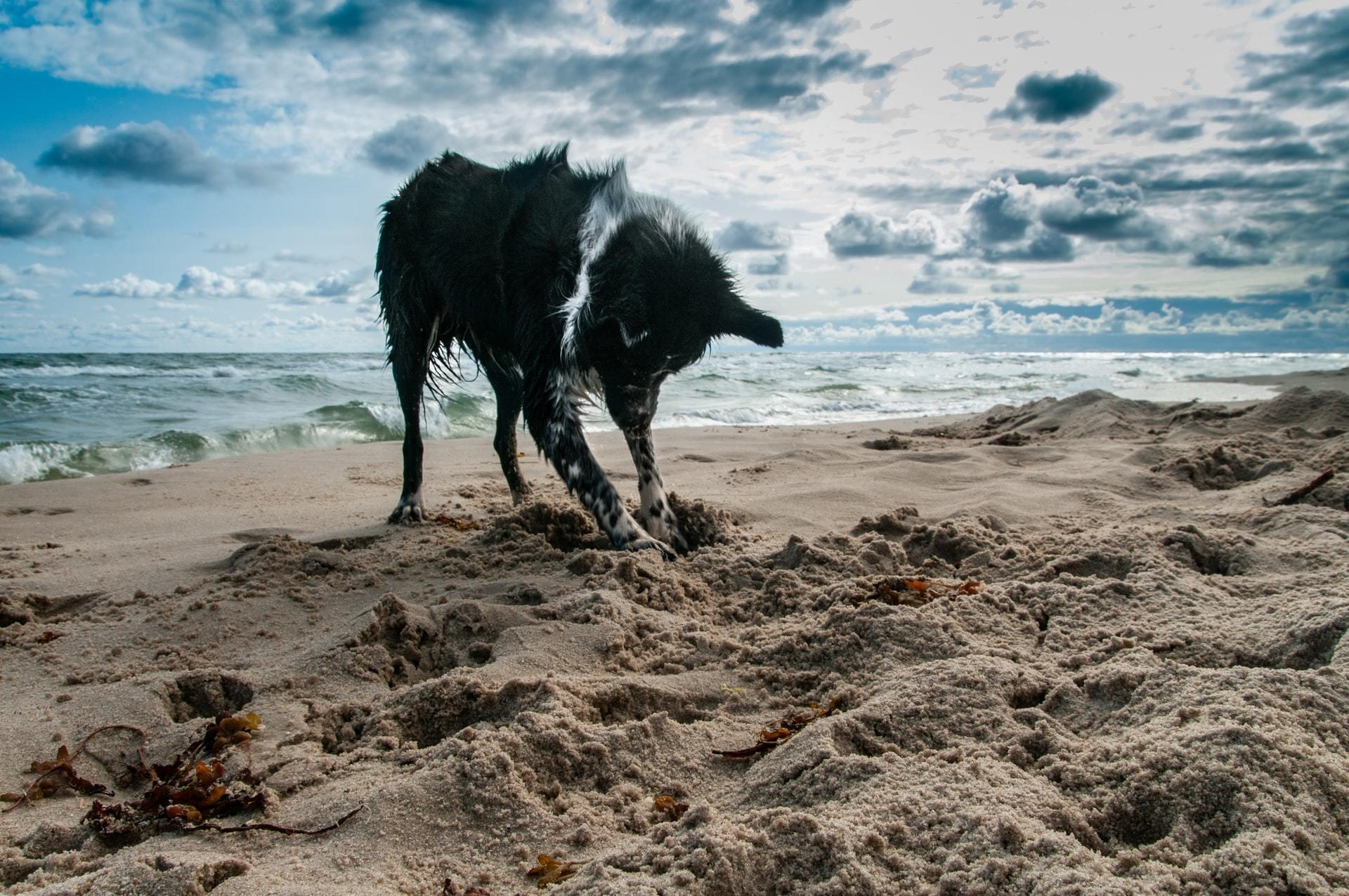 stop dog digging