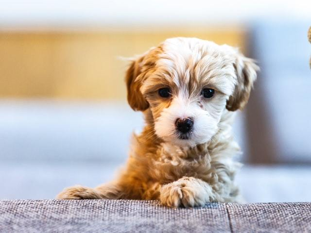 tips for new puppies