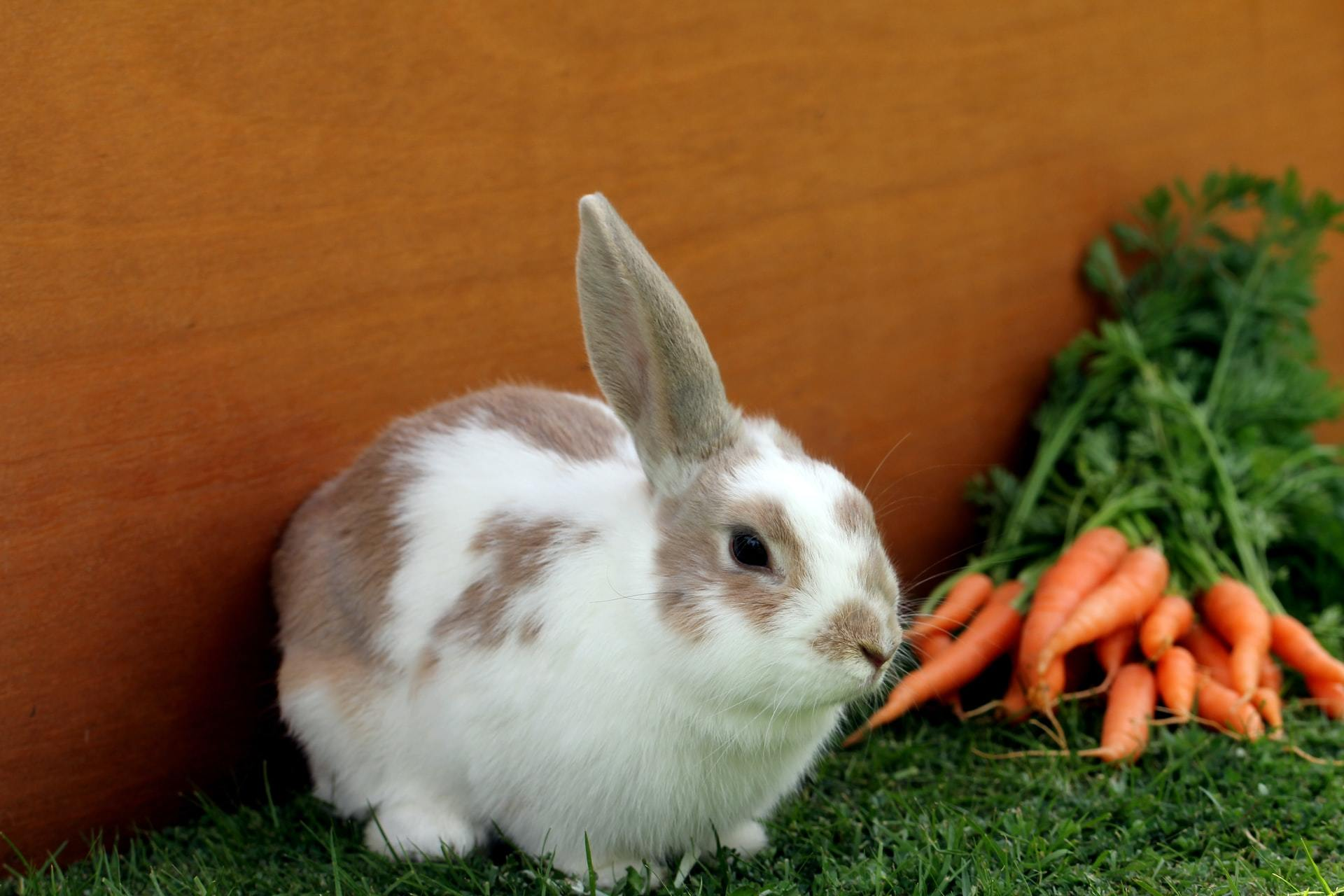 Poisonous and Non Toxic Plant List for Rabbits   FirstVet