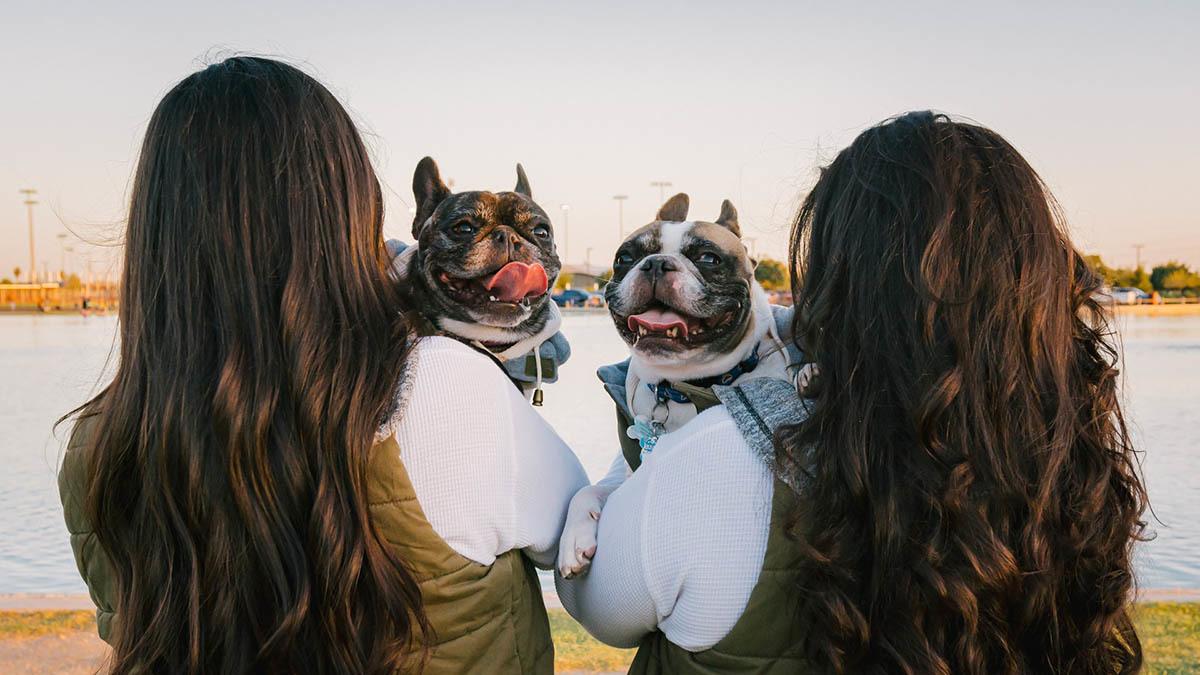 Trubbnossyndrom hund