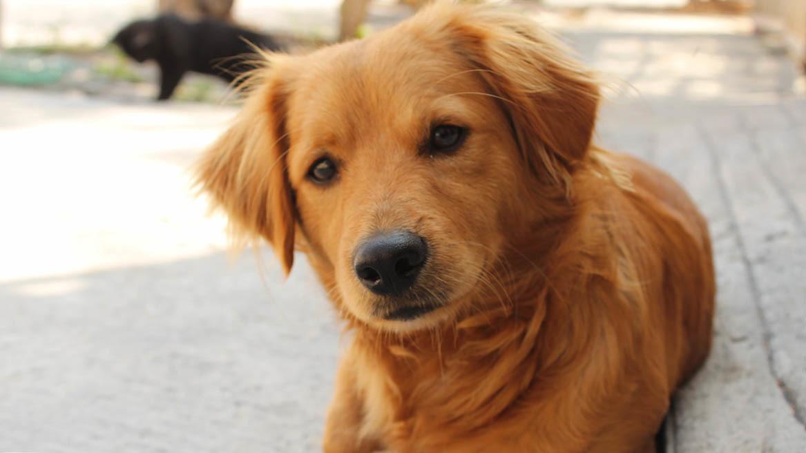 Undervikt hos hund