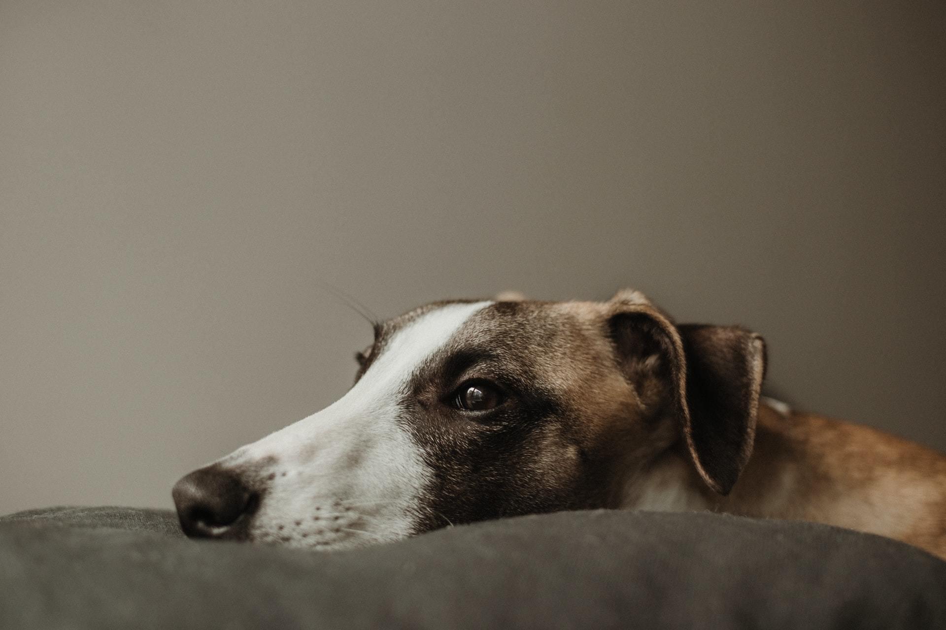 veterinary chiropractic