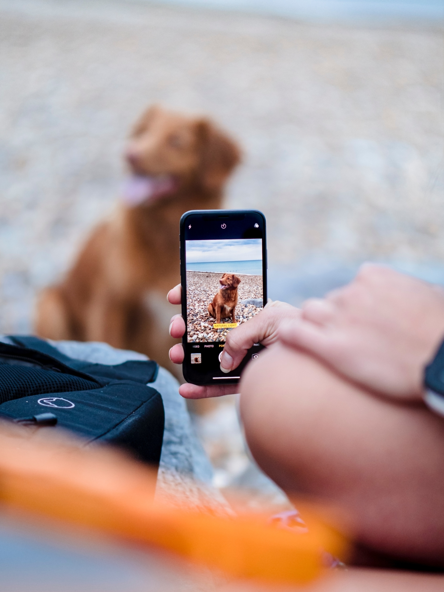 Virtual Care for Pets