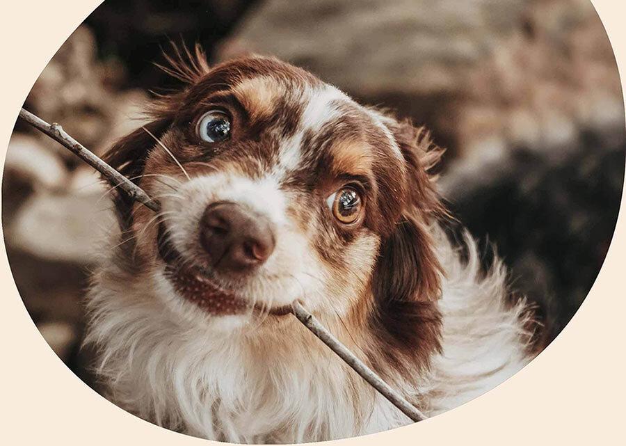 Hero doggo cropped v2
