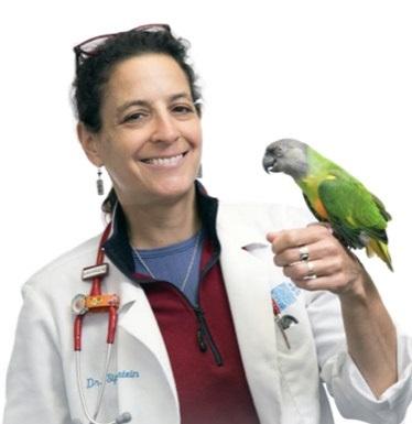 Dr. Linda J. Siperstein